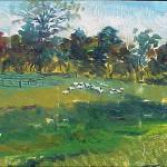 Sheep in Meadow