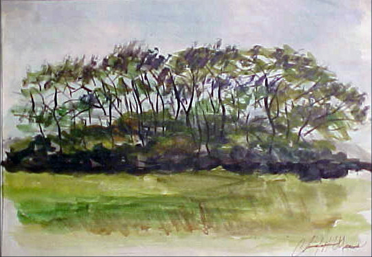 Trees in the Brush